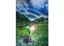 Healing Rain